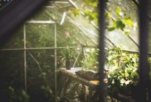 Kolorowe rośliny do ogrodu